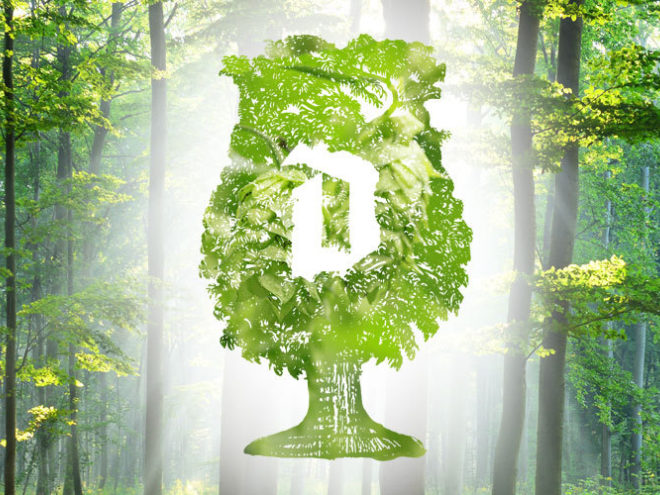 First 5-hectare Duvel forest will become a reality